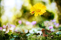 Flower on nature background Stock Photos