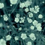 Flower nature beauty Stock Photo