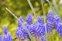 Flower nature Dew summer Royalty Free Stock Photo