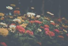 Flower, Nature, Flora, Sky