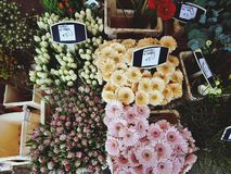 Flower, Nature, Floral. Farmers flower market Royalty Free Stock Photos