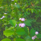 Flower. Nature flower small green violet royalty free stock photos