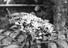 Flower nature spring agriculture plants plant flowers blackandwhite royalty free stock image
