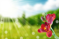 Flower and nature spring bokeh background Stock Image