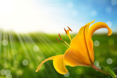 Flower and nature spring bokeh background Royalty Free Stock Image