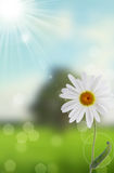 Flower and nature spring bokeh background Royalty Free Stock Images