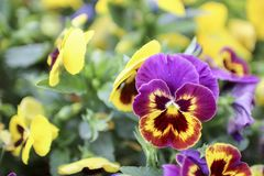 FLOWER NATURE VIOLET YELLOW GREEN VERDE CIELO stock images