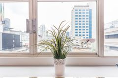 Flower near windows royalty free stock images