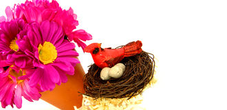 Flower and Nest Stock Photos