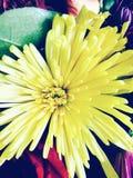 Flower. New York Nature Stock Image