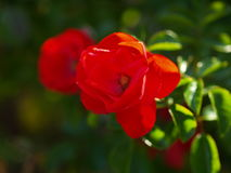 Flower nice color. In mother nature Royalty Free Stock Photography