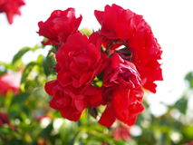 Flower nice color. In mother nature Royalty Free Stock Photos