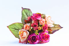 Flower for a nice day. Stock Photos