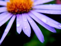 Flower. Nice flowers always pleasing to the eye Stock Image