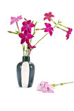 A flower is the Nicotiana alata Stock Images