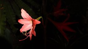 Flower. In the night Royalty Free Stock Photography