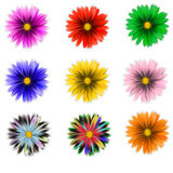 Flower. Nine brightly colored vector flowers Stock Images