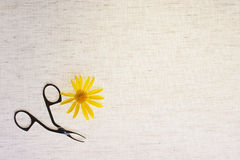 Flower with nippers Stock Image