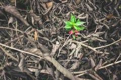 Flower no iść więdnie Zdjęcia Stock