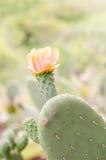 Flower of nopal cactus. Royalty Free Stock Photos