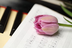 Flower on note paper Stock Photography