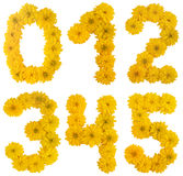 Flower numbers Royalty Free Stock Photos