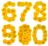 Flower numbers. Numbers 6 7 8 9 0 (six seven eight nine zero) made of yellow flowers (Rudbeckia lanciata royalty free stock photo