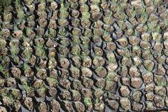 Flower Nurseries Stock Photos