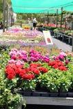 Flower Nursery Stock Image