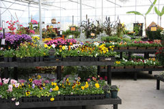 Flower nursery Royalty Free Stock Photography
