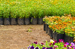 Flower nursery Royalty Free Stock Image