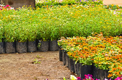 Flower nursery Royalty Free Stock Photo