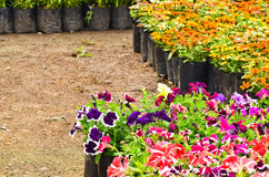 Flower nursery Stock Photo