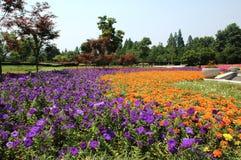 Flower nursery Royalty Free Stock Photo