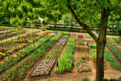 Flower Nursery in HDR Stock Photography
