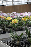Flower nursery Stock Photos