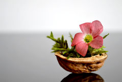 Flower in nutshell. On dark background royalty free stock photo