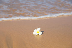 Flower and ocean waves Stock Photo