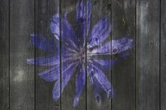 Flower  on old wooden fence. The flower image on an old wooden fence Stock Photo