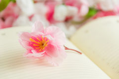 Flower on open blank note book against flower background Royalty Free Stock Photos