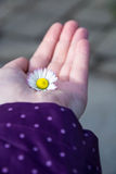 Flower in open hand Stock Photography