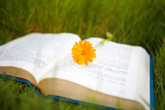 Flower on the opened book Stock Photos