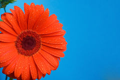 Flower Orange Stock Photos