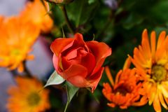 Flower, Orange, Close Up, Petal stock images