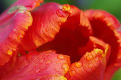 Flower, Orange, Close Up, Petal stock images