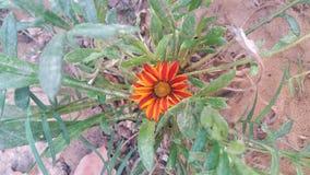 Flower. Orange green plant garden stock images