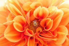 Flower, Orange, Yellow, Close Up