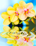 Flower orchid. Stock Images