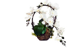 Flower of orchid in basket Stock Photography
