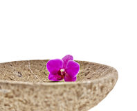 Flower orchid bowl Royalty Free Stock Images